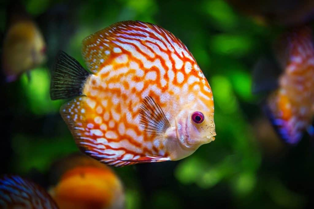 Do Fish Get Sad When Other Fish Die?