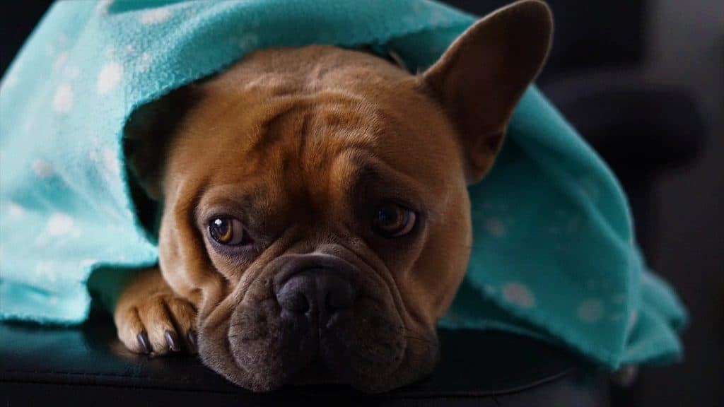 How Do I know If My Dog Is Cold At Night