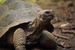 How Long Can Turtles Stay Out of Water